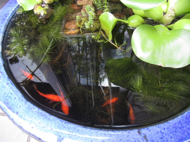 Protecting Your Fish From Predators Oh What A Beautiful
